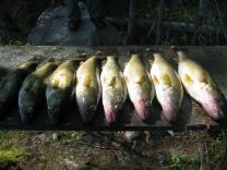 fishonboard_1
